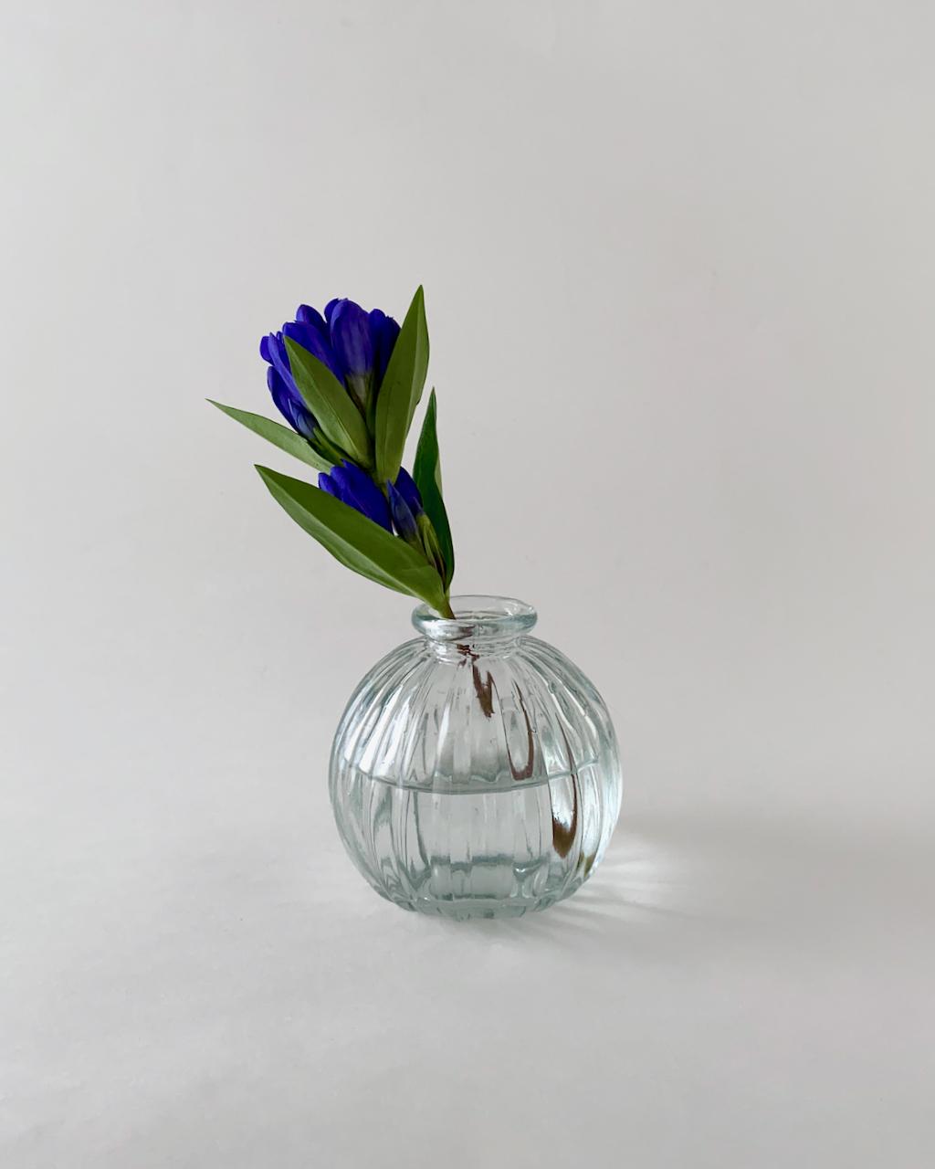 Jive Vase Line フラワーベース ジャイブ ライン