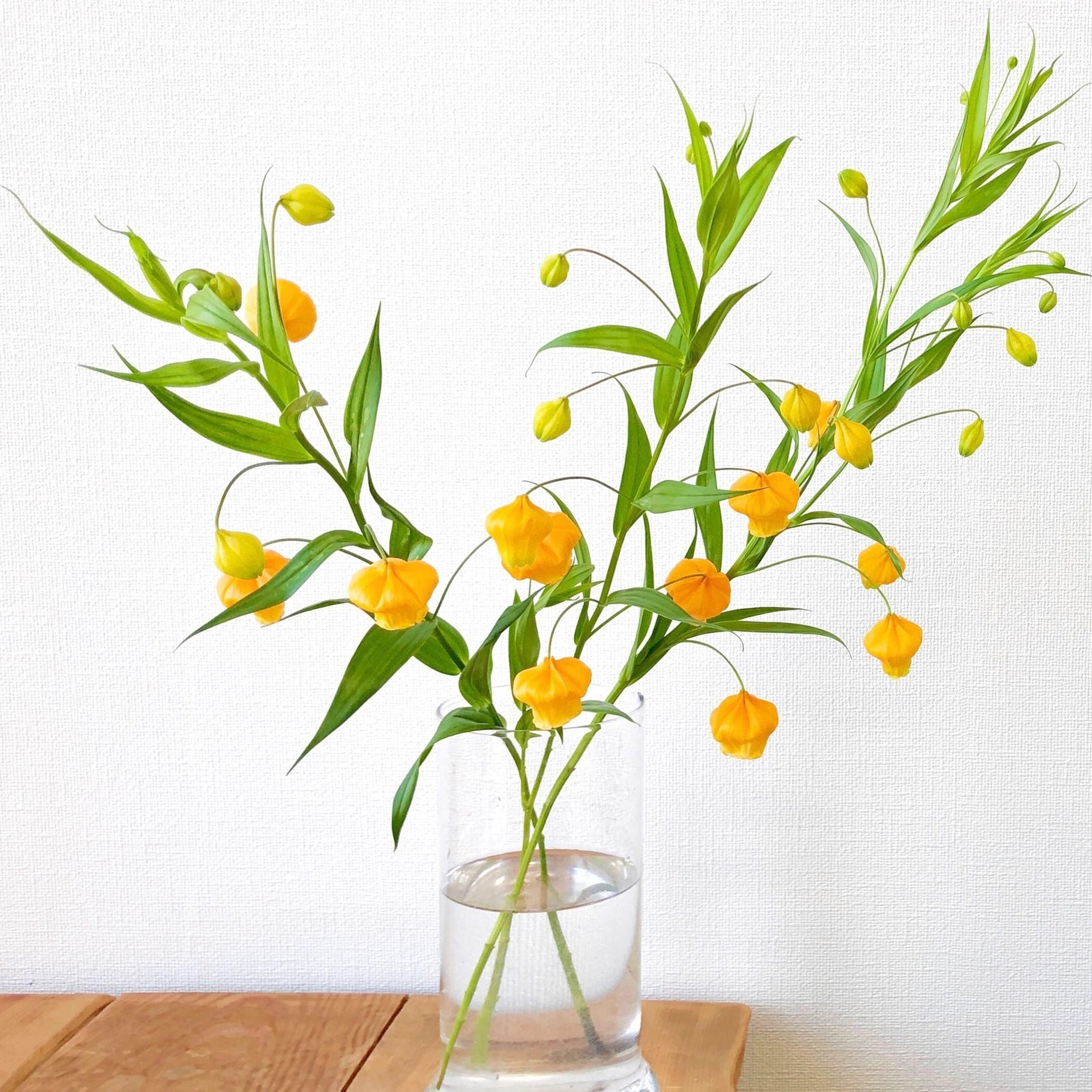 『コロナ支援』北海道産! 道北なよろ農協の『氷点花』サンダーソニア L 10本
