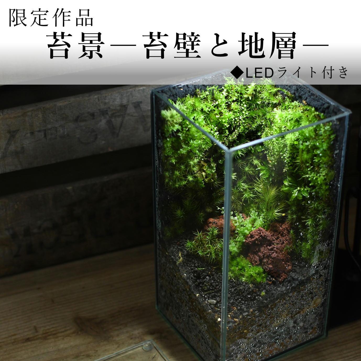 苔景−苔壁と地層−【苔テラリウム・現物限定販売】◆LEDライト付き 2021.4.23#3