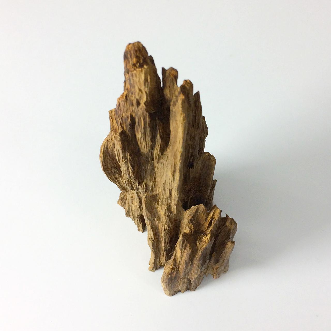 タニ沈香木