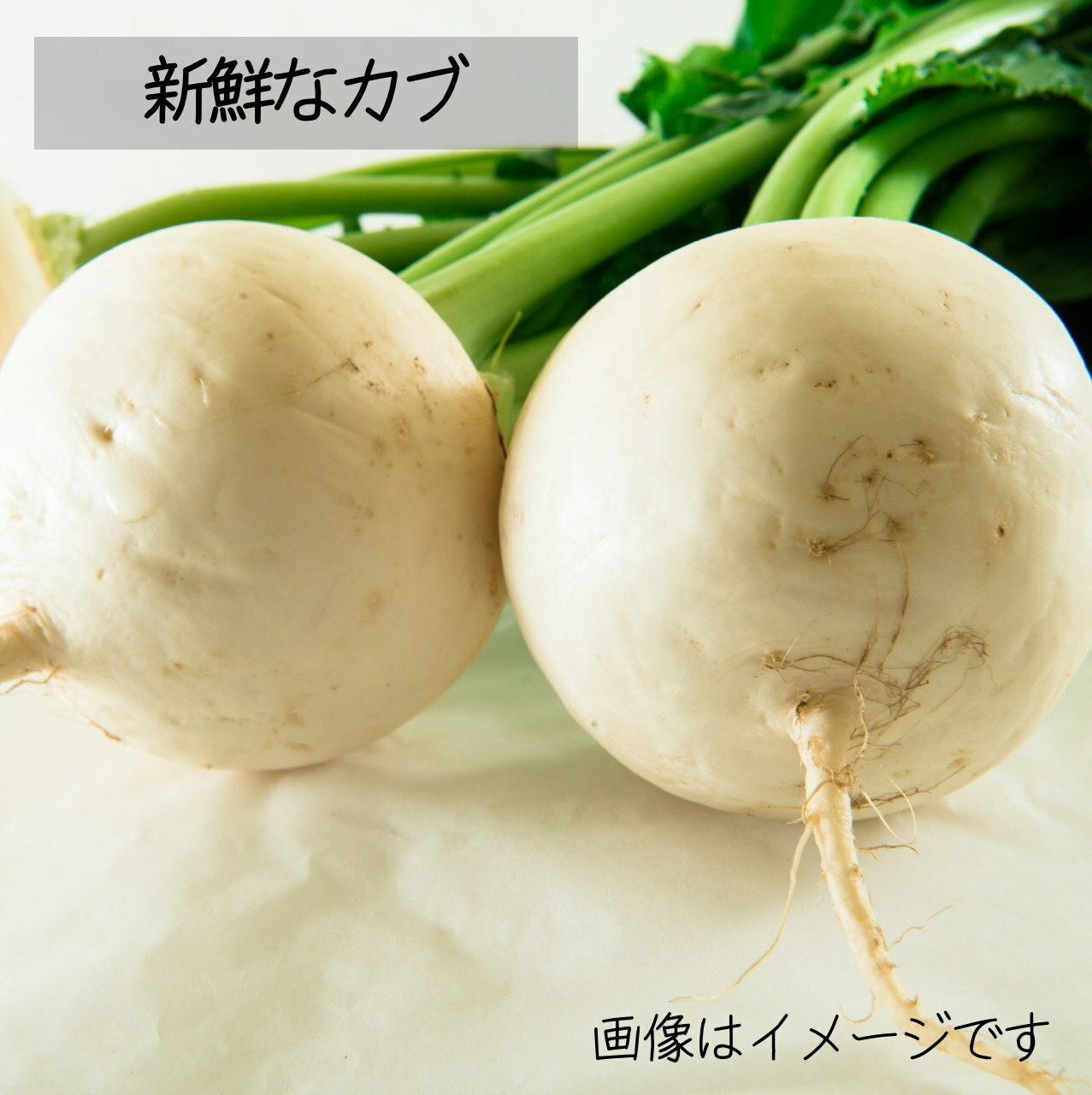 新鮮な冬野菜 : カブ 約3~4個 11月の朝採り直売野菜 11月28日発送予定
