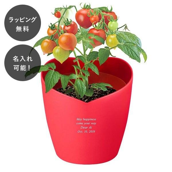 名入れ ハートポット栽培キット ミニトマト tu-0474