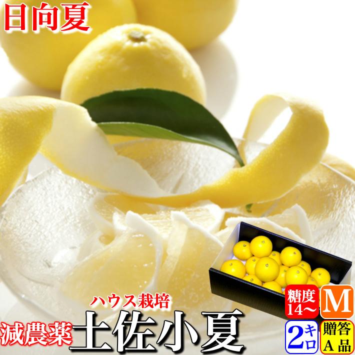 糖度14度 高知県山北産 減農薬ハウス小夏 2kg 日向夏 贈答用 Mサイズ 送料無料 クール便