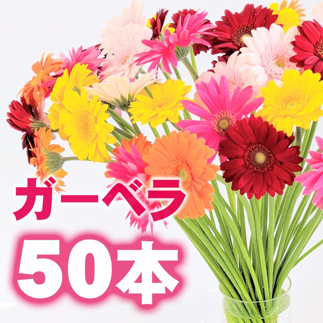 ガーベラ 50本【ビタミン・フラワー】★フラワーロス支援