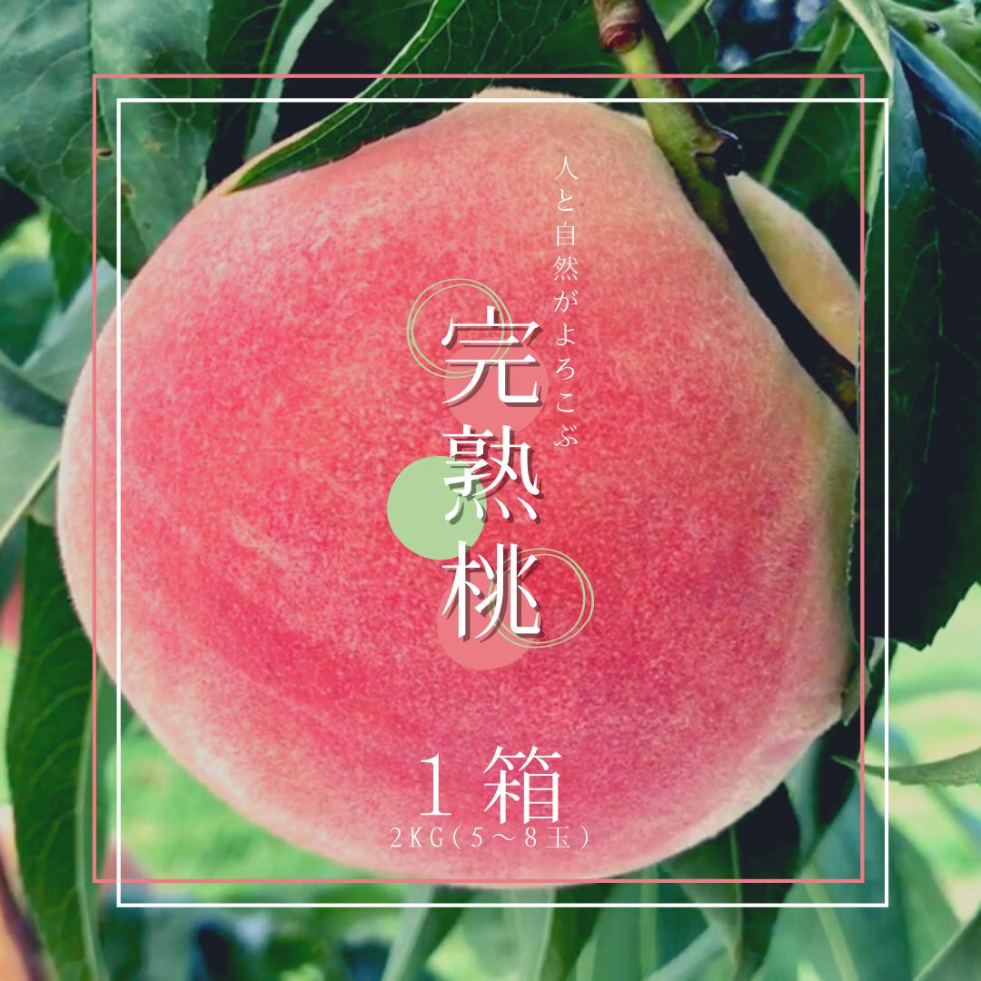 《7月分》硬さ選べる!完熟桃 2kg(5〜8玉)× 1箱 [お中元としてご購入の場合は備考欄へ記載をお願いします]
