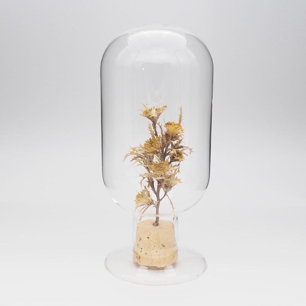 Glass Dome Object/ Dayandora Formosa