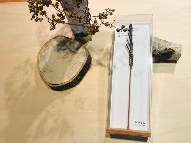 yasobox  植物見本 「コウヤワラビ」
