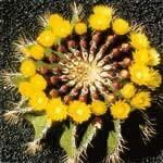 セルフエスティームカクタス[Self Esteem Cactus]