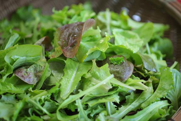 旬の野菜お試しセット S(約8~10種類 2~3人分)