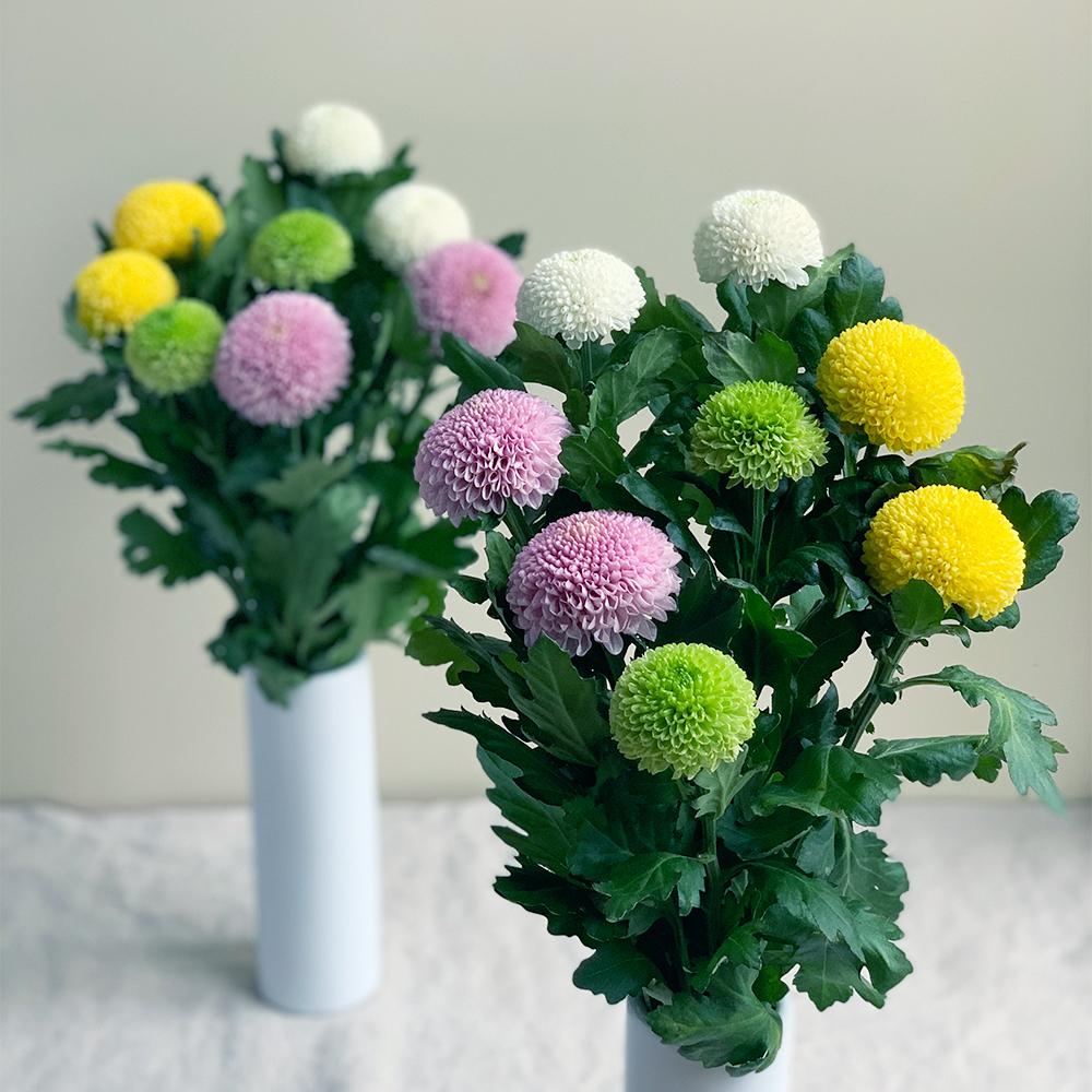 お盆の贈り花 ピンポンマムMIX16本 お供え1対セット【送料込】