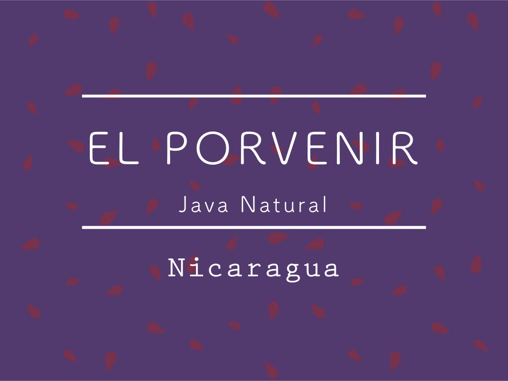 【200g】ニカラグア /  El Porvenir JAVA Natural