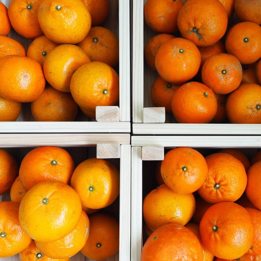 奄美大島の柑橘たんかん