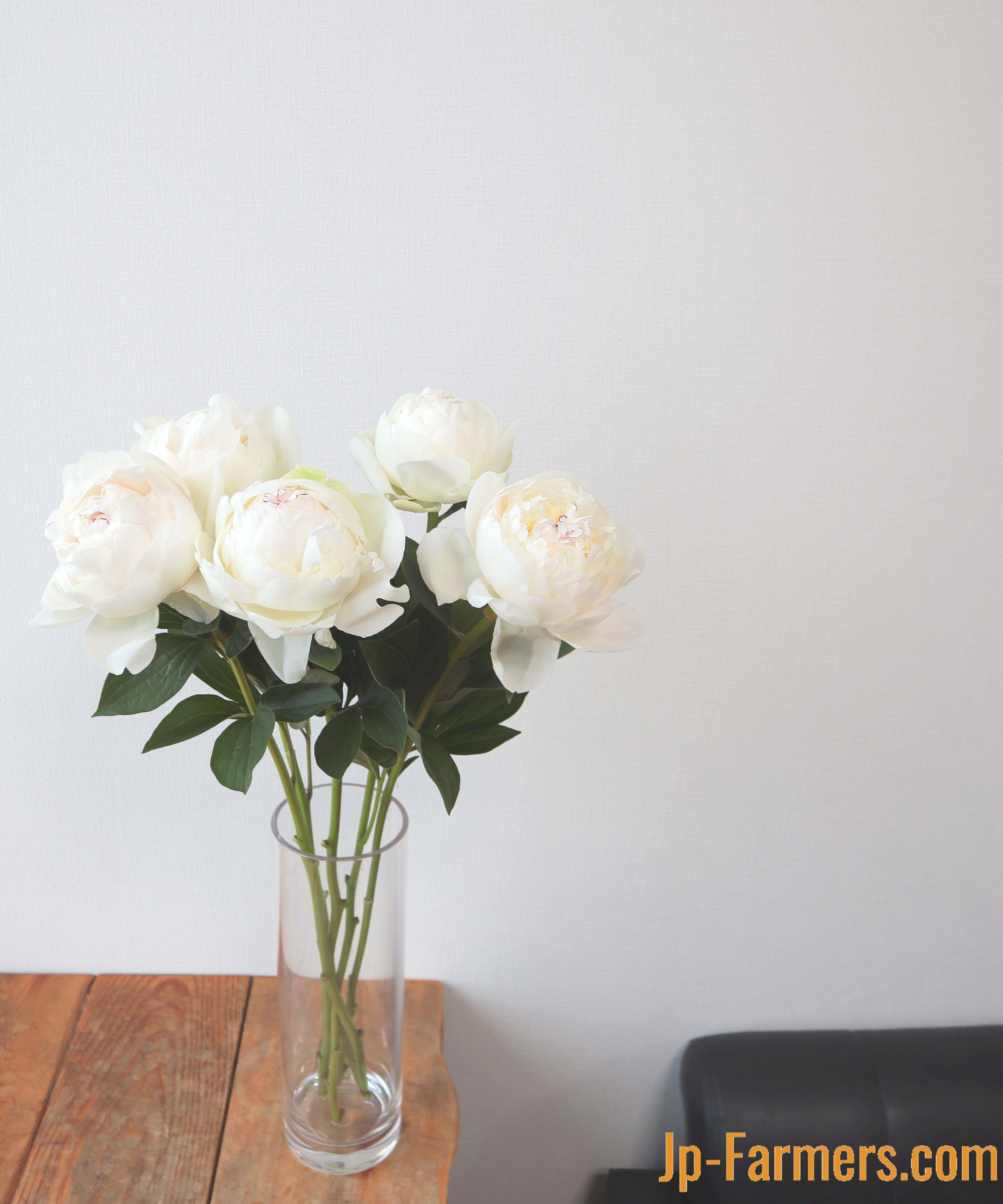 和歌山県産 芍薬 ラテンドレス 希少な白 10本