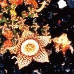 ライフフォースカクタス[Life Force Cactus]