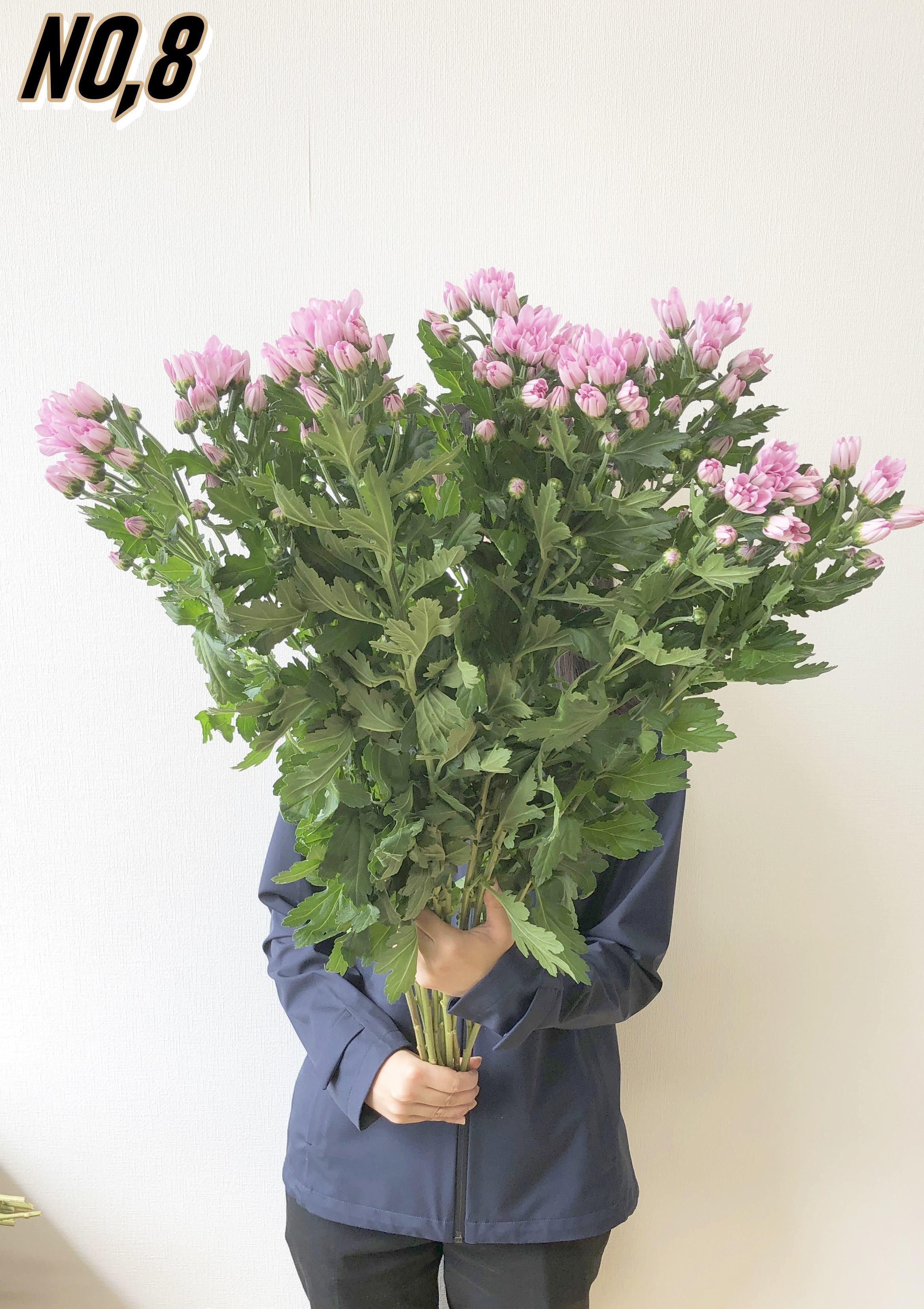 ★ お墓参りへ行こう!国産お供え花シェアBOX50 №1【ロスフラワー救済!】