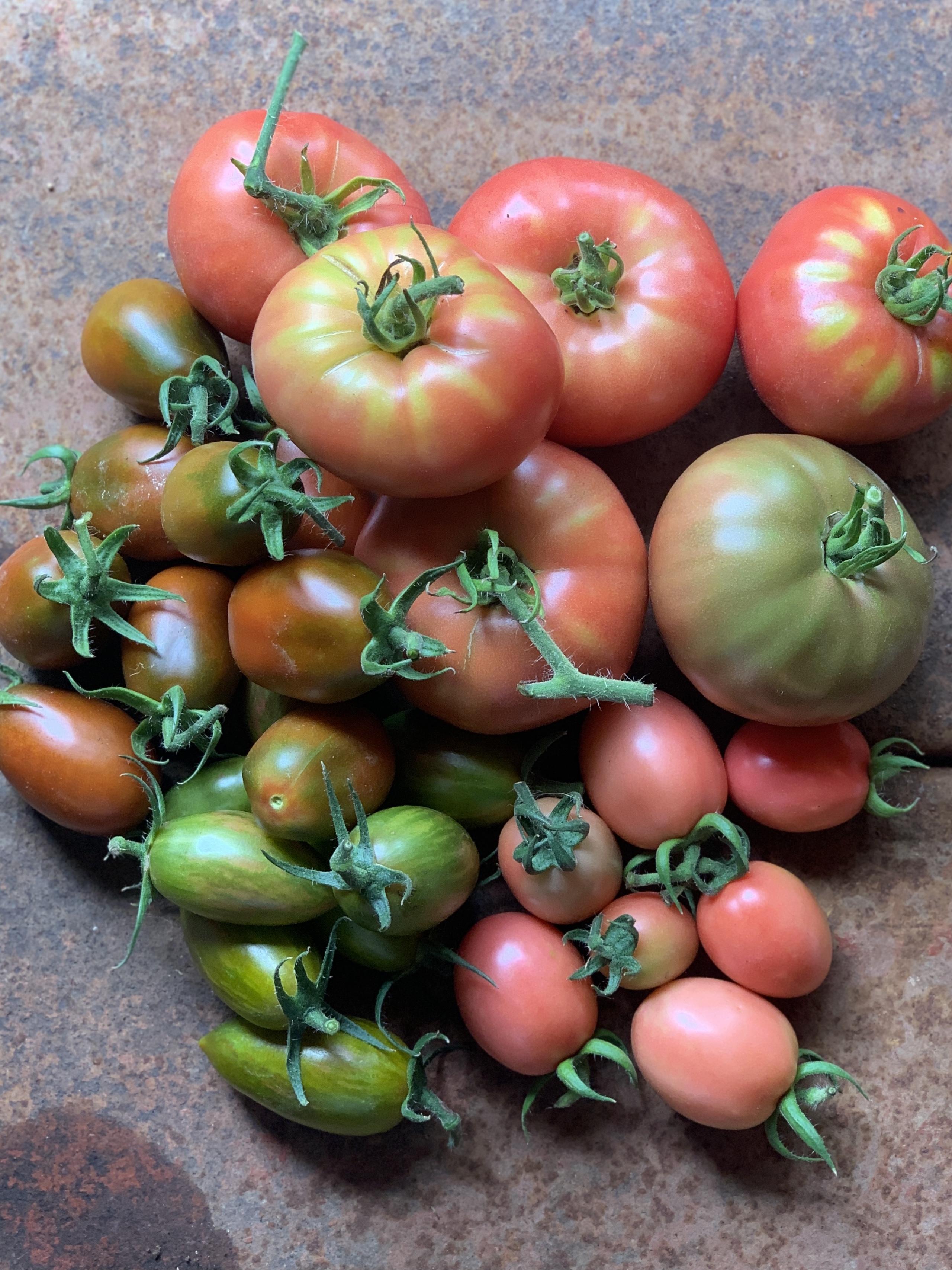 オーガニックエアルームトマト