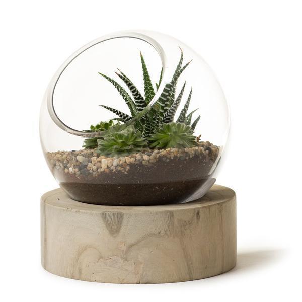 Roost ルースト Orbit Terrarium テラリウム ガラス鉢 x Wood S