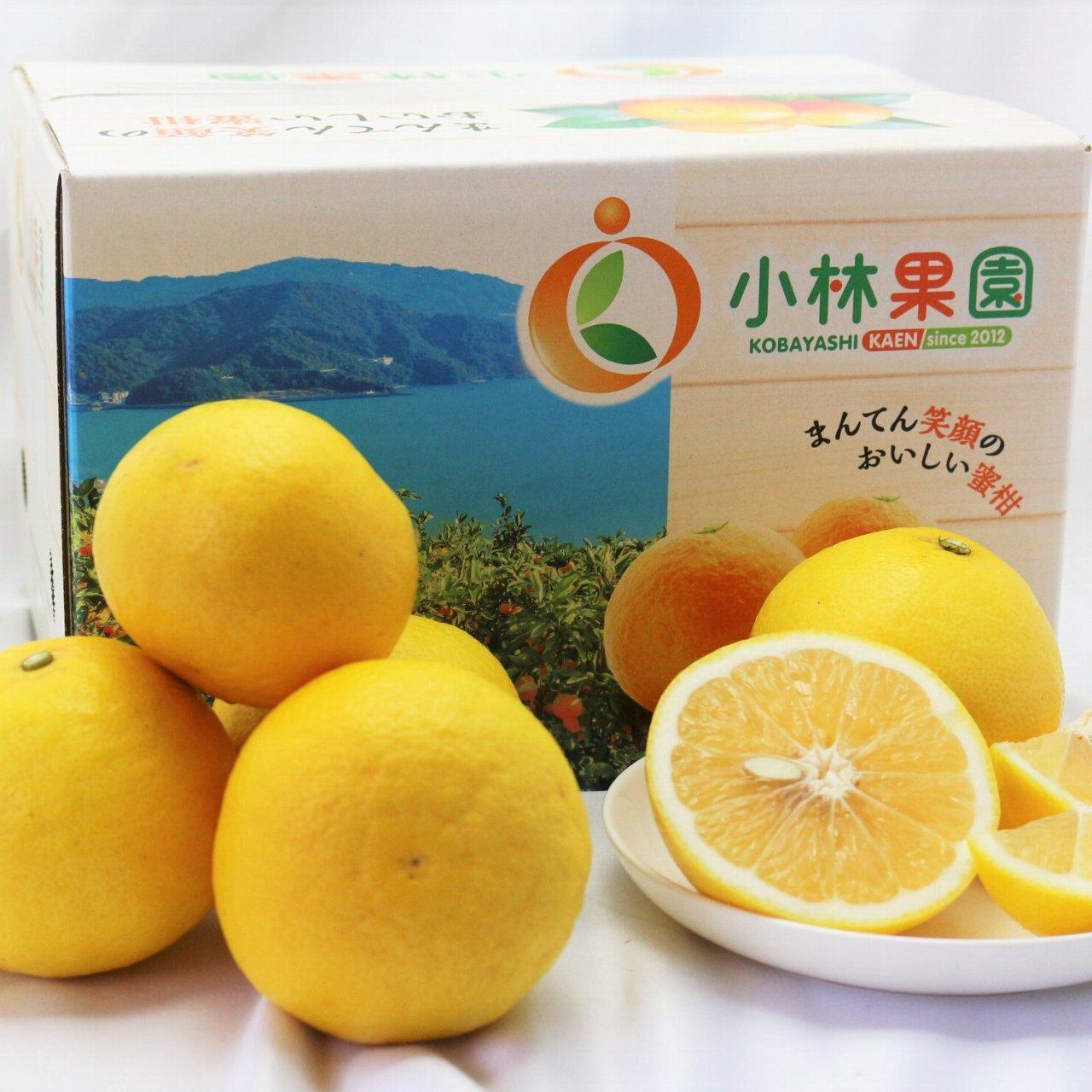 小林果園のニューサマーオレンジ 2.5kg
