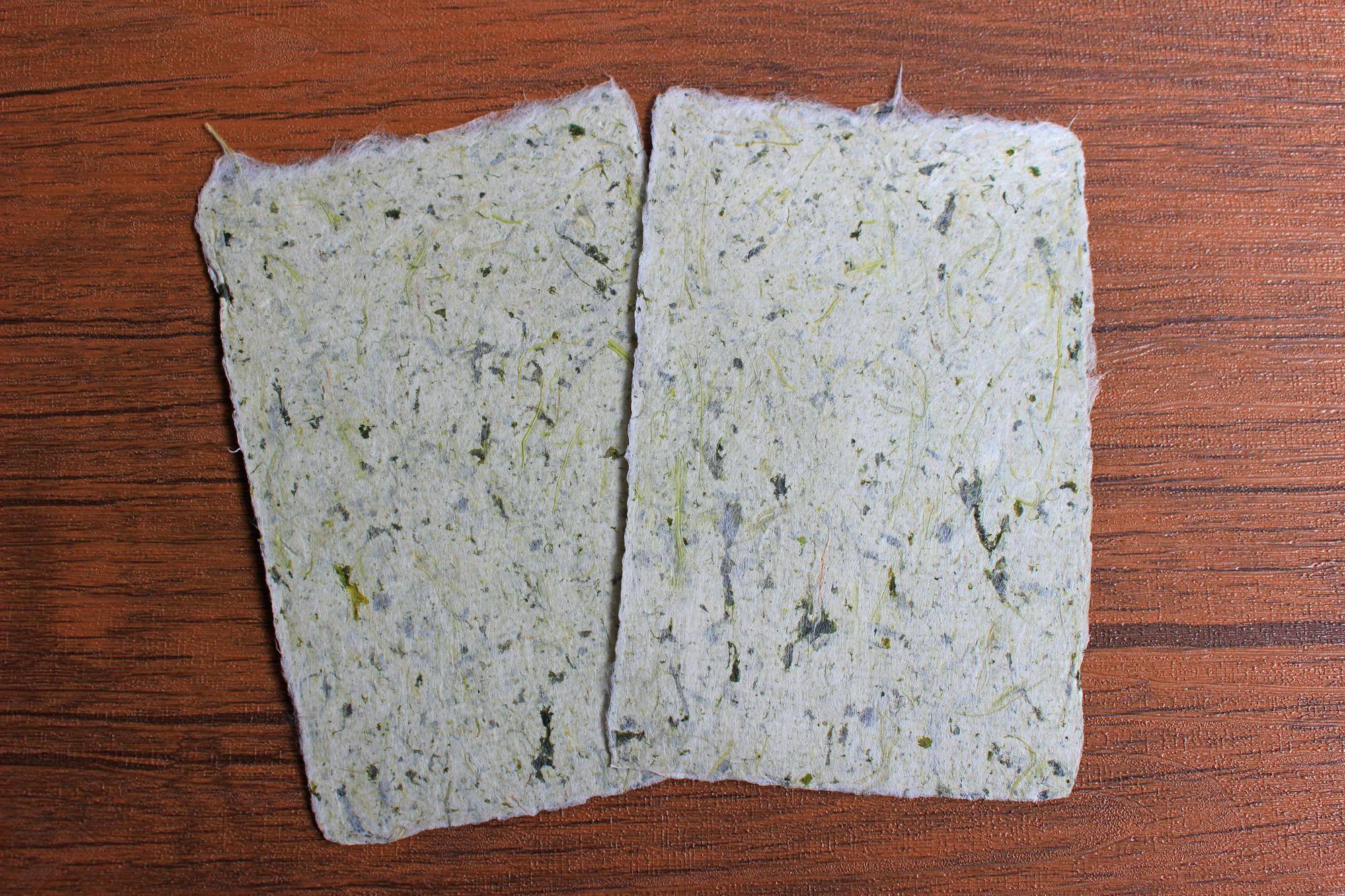 <エコロジー>ほんのり緑色の青菜(ターサイ)入手すき和紙ポストカード(2枚セット)