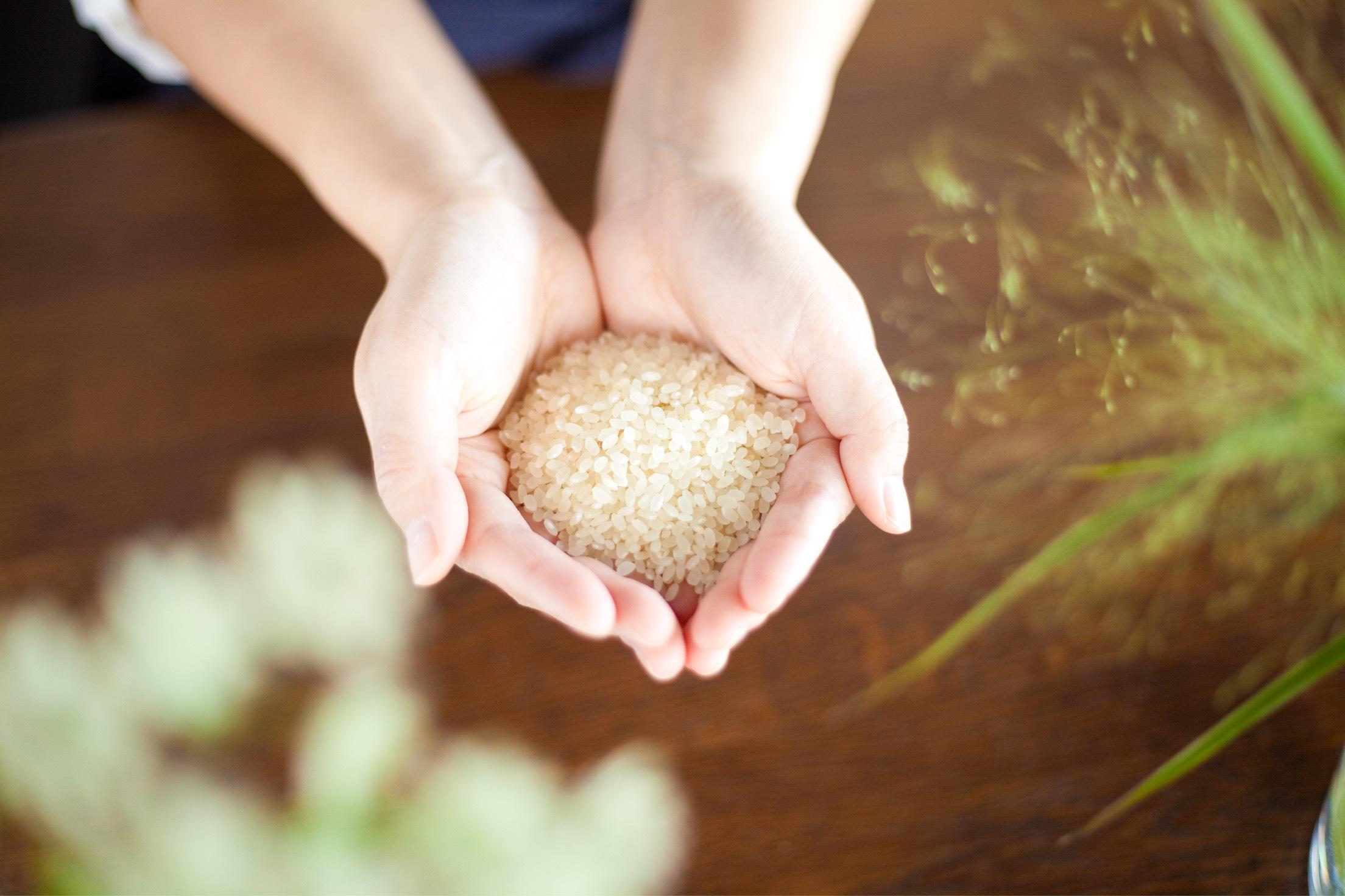 レンゲ農法で育てたお米 もちもち低アミロース米 自家精米5kg