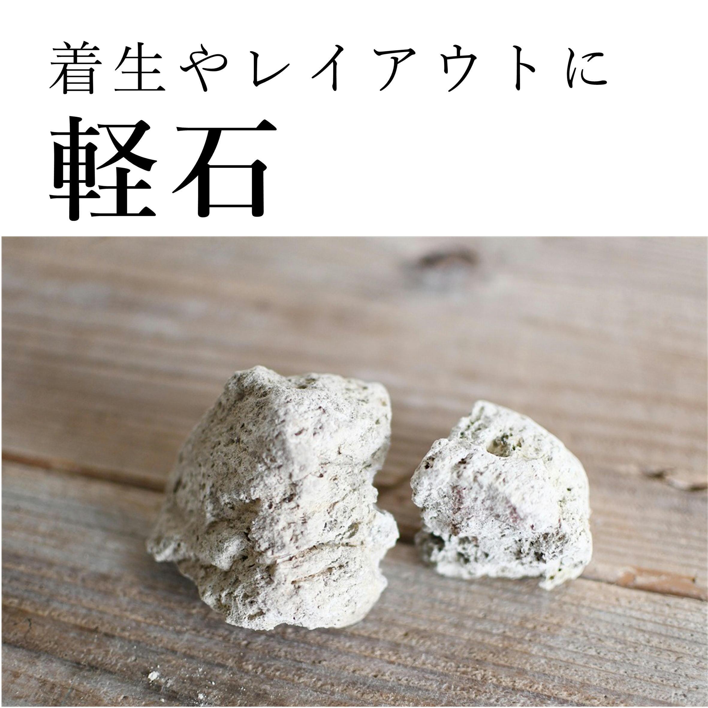 軽石 Mサイズ(6〜9cm) 2個入り【レイアウト用・着生用】