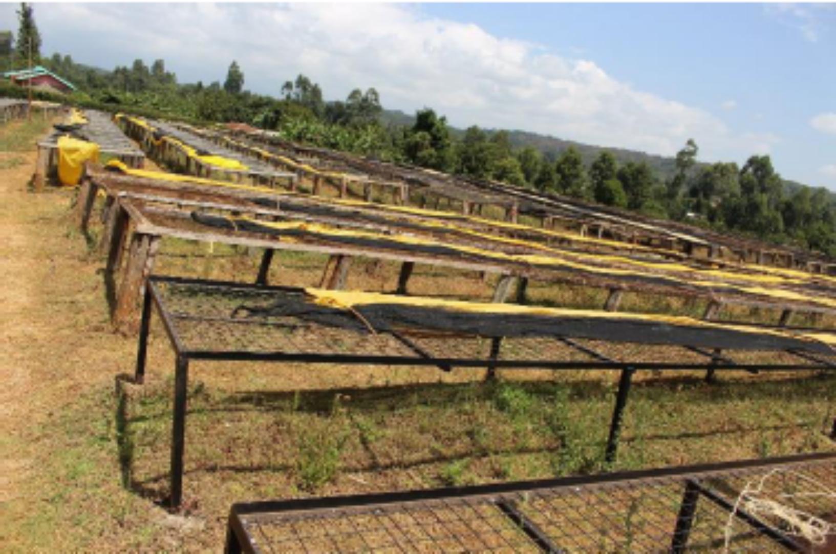 【500g】ケニア カビンガラ ~kenya kabingara wet mill~