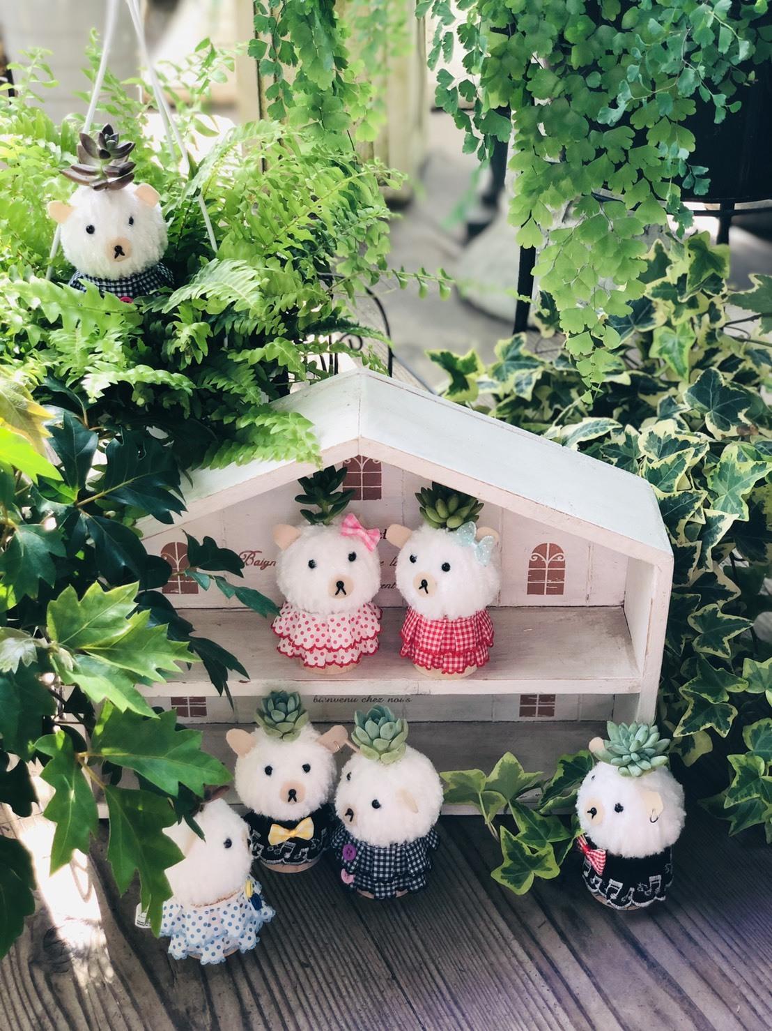 【多肉植物】KINOKOペア2個セット(ボーイ&ロックガール)