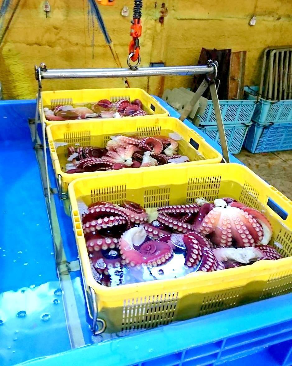 (0041)北海道紋別産 冷凍おいしいボイルたこ足 M(足2本・約1.2kg)