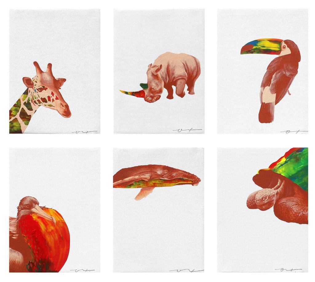 リアルな動物の描写にozの色彩を加えた、animolor(アニマラー