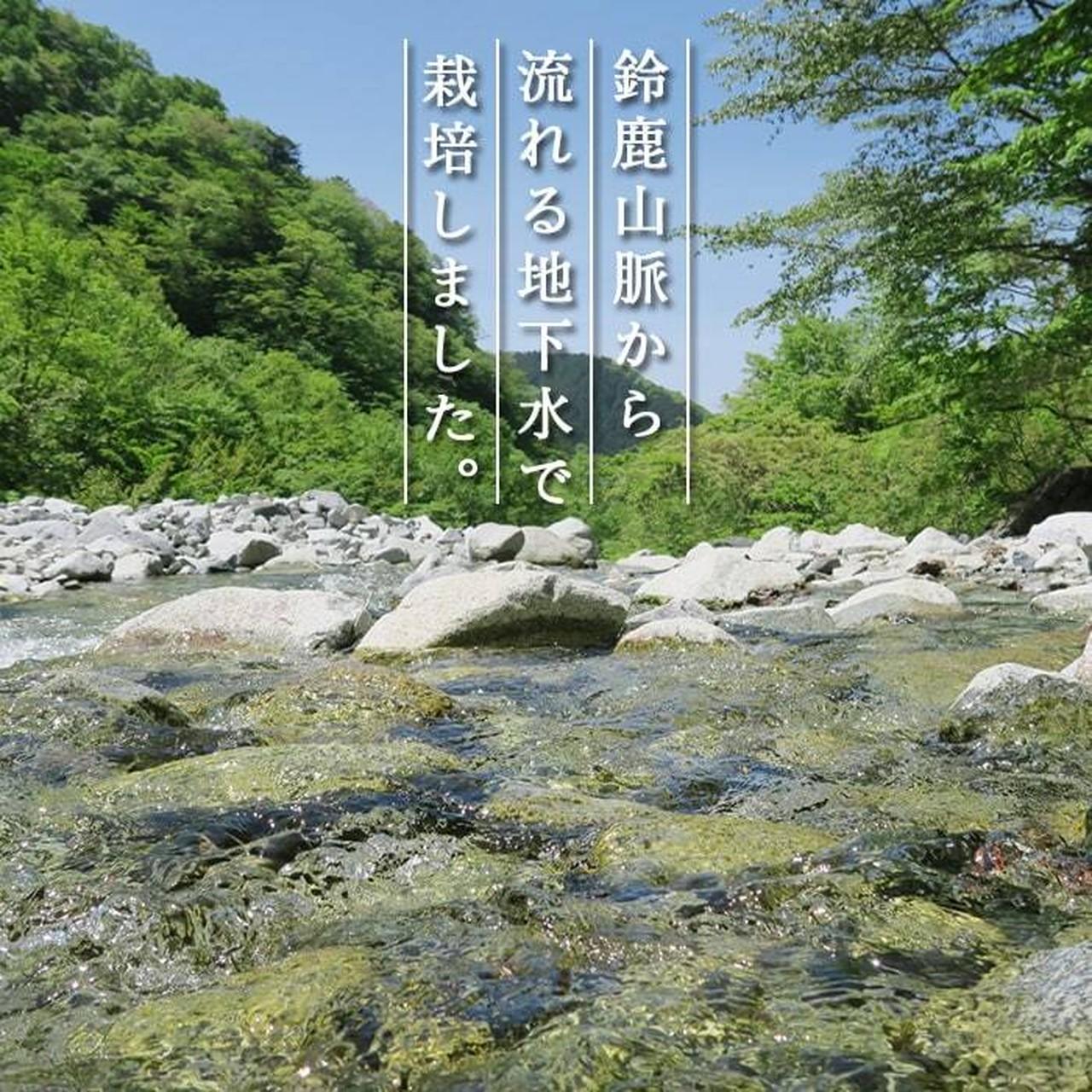 【87farm】業務用 食べられる ドライフラワー(コーンフラワー ミックス ) エディブルフラワー