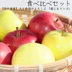 【発送:10月20日〜】人と自然がよろこぶ「感じる林檎」信州原産3種 2kg