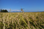 平成29年度 青森県産まっしぐら(農薬9割減、無化学肥料)玄米10キロ