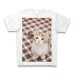 子猫のTシャツ5【送料無料】