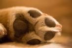 柴犬まる;ポストカード;まるの手