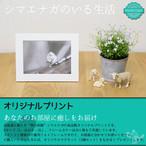 《癒やしの小鳥》シマエナガのオリジナルプリント(Lサイズ)【送料無料】