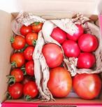 【6月中旬まで!】トマト3種お試しセット