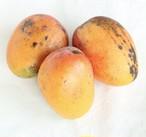 【訳ありですが訳をお聞いて下さい】自然栽培マンゴー