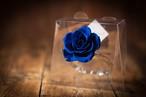 【花の誕生日プレゼント】プリザーブドフラワー/Jewel Ring-誕生日カラー-9月
