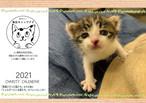 東京キャッツアイ チャリティー保護猫カレンダー2021年