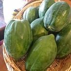 宮崎県産 青パパイヤ papaya มะละกอ  (無農薬) 1個(約400-600g)