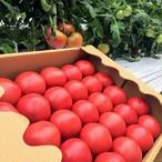 大和高原の恵み☆有機トマト4kg箱 丸ごとかぶりつき!冷やしトマト☆トマトソース
