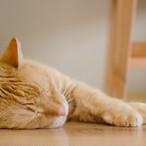 猫とのくらしをはじめたい(再開したい)相談