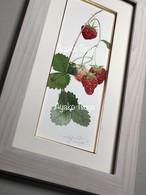 オリジナル水彩画       「苺」