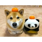 柴犬まる;ポストカード;みかん置き場(2個まで)