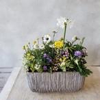 春を感じる球根植物のギャザリング寄せ植え