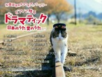 ベストアルバム 『ドラマティック日本のうた 愛のうた』vol.1 妹尾哲巳