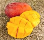 (I1)【静岡産】高級国産マンゴー(2~3個)2kg