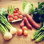 こどもの味覚を育むお試し野菜セット(野菜約7種、卵6個)(1人~2人前)