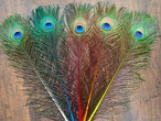 Peacock Eye ピーコックアイ【70 / 1000 SELECTION】