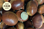 愛媛県産栗 500g【大粒】☆カラダに優しい無農薬☆渋皮煮用に大きなサイズを集めました!